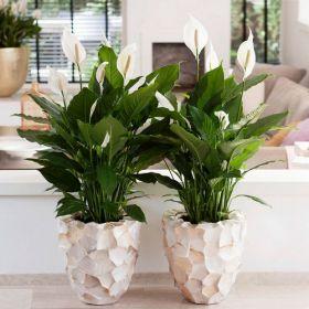 Уход за комнатными и офисными растениями