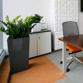 """Озеленение офиса """"Kinstellar"""""""