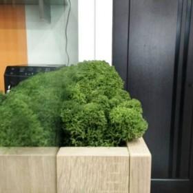 """Озеленение офиса  """"Вацак"""""""