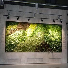 """20-м озеленения в """"ZEO Alliance"""""""